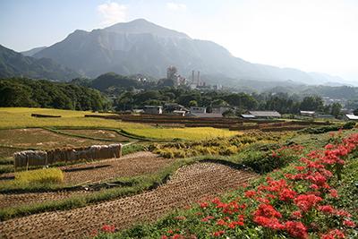 武甲山と寺坂棚田