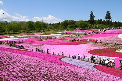 羊山公園芝桜の丘