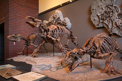 県立自然の博物館